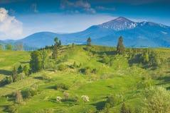 在Hoverla下的喀尔巴阡山脉的施普林谷 免版税图库摄影