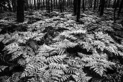 在Hrubà ¡ Skà ¡ la -岩石城市附近的蕨森林 免版税库存图片