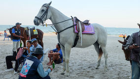 在huahin海滩的马骑术 免版税图库摄影