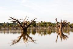 在Igarapé -亚马孙河的死的树 库存图片