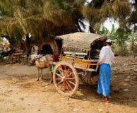 在Innwa镇的马推车在曼德勒,缅甸 免版税库存图片