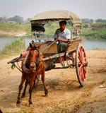 在Innwa镇的马推车在曼德勒,缅甸 库存图片