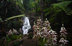在Inthanon国家公园的Siriphum瀑布在清迈,泰国 免版税库存照片