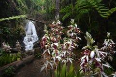 在Inthanon国家公园的Siriphum瀑布在清迈,泰国 库存照片