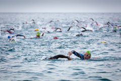 在Ironman三项全能竞争的开始的Triathletes游泳 免版税图库摄影