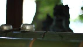 在Iruki寺庙的洗净低谷在东京 股票录像