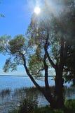 在Ivankovskoye水库海岸的晴天在环境旅馆Vetochka的 库存照片