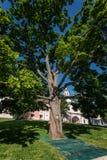 在Iversky女修道院的疆土的橡木 库存照片