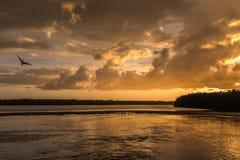 在J的日落 n 丁亲爱的全国野生生物保护区, Sanibe 免版税库存照片