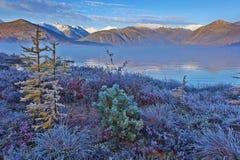 在Jack London's湖的冷淡的秋天黎明 一场雾 在植物的树冰 kolyma 库存图片