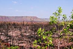 在Jalapao的被烧的植被 免版税库存照片