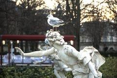 在Jardin des Tuileries的白色鸟 免版税库存图片