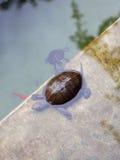 在Jardin Majorelle的乌龟 免版税图库摄影