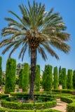 在jardines的高棕榈树,城堡de的皇家庭院 免版税图库摄影