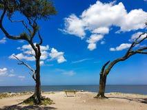 在Jekyll海岛,乔治亚上的漂流木头海滩 免版税库存图片