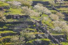 在Jerte谷,卡塞里斯的樱花小山 在公园工厂西班牙语附近的龙舌兰阿尔梅里雅安大路西亚cabo de desert gata横向山自然本质 库存照片