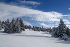 在Jeseniky山的斯诺伊平原 免版税库存照片
