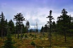 在Jeseniky山的秋天 免版税库存照片