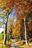 在Jeseniky山的秋天 免版税库存图片