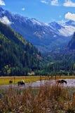 在jiuzhaigou前的Savana 免版税库存图片