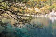 在jiuzhaigou,中国的秋天 图库摄影
