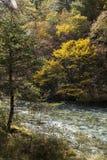 在jiuzhaigou,中国的秋天 免版税库存图片