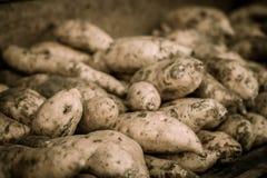 在jogja拍的照片的薯类白薯商店关闭印度尼西亚 图库摄影