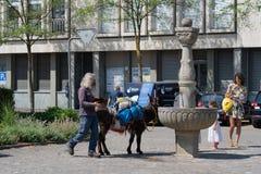 在Jugendfest布鲁格的驴饮用水 库存图片