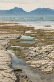 在Kaikoura海岸的岩石水池处于低潮中 免版税库存照片