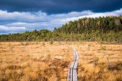 在Kakerdaja沼泽的一串足迹 库存图片