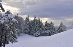 在Kal,有多雪的树的斯洛文尼亚的美好的冬天风景 库存照片