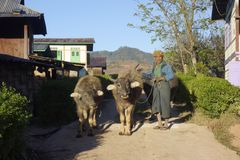 在Kalaw附近,掸邦在缅甸,01-20-2018 人 免版税库存照片