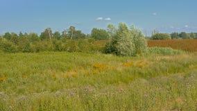 在Kalkense Meersen自然reerve,富兰德,比利时的沼泽地风景 库存图片
