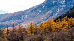 在Kamikochi的秋天 免版税库存照片