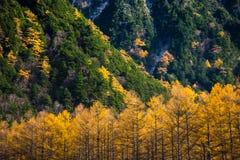 在Kamikochi的秋天 免版税库存图片
