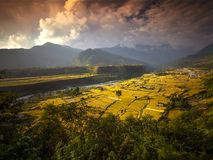 在kandakki尼泊尔的露台的稻田 图库摄影
