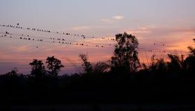 在Kanha国家公园的日落Pic 免版税库存图片