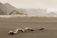在Karekare海滩的被风化的树干 免版税库存图片