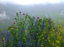 在karmadon峡谷的花 免版税库存图片
