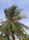 在Karon海滩的椰子树 免版税库存图片