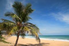 在Karon海滩的棕榈树在普吉岛 免版税图库摄影