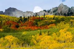 在Kebler通行证,科罗拉多的红色,橙色,黄色和绿色白杨木 免版税图库摄影
