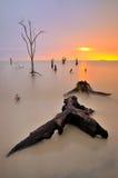 在Kelanang海滩的死的木头 库存照片