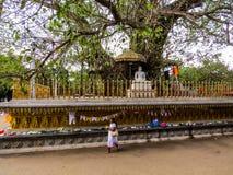 在Kelaniya寺庙的Bodhi树 免版税库存照片