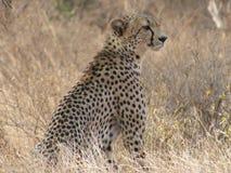 在kenia的徒步旅行队 库存照片