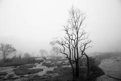 薄雾。 免版税图库摄影