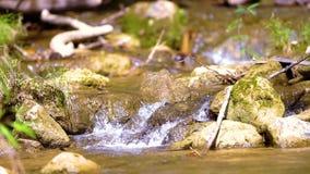 在Khao Laem国家公园的streamlet中间 影视素材