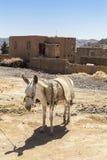 驴在Kharanagh村庄,伊朗 库存图片