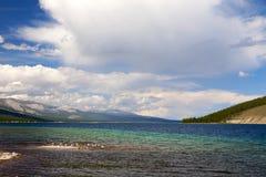 在Khovsgol湖的海鸥 库存照片