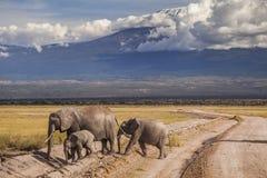 在Kilimajaro登上背景的大象 免版税库存照片